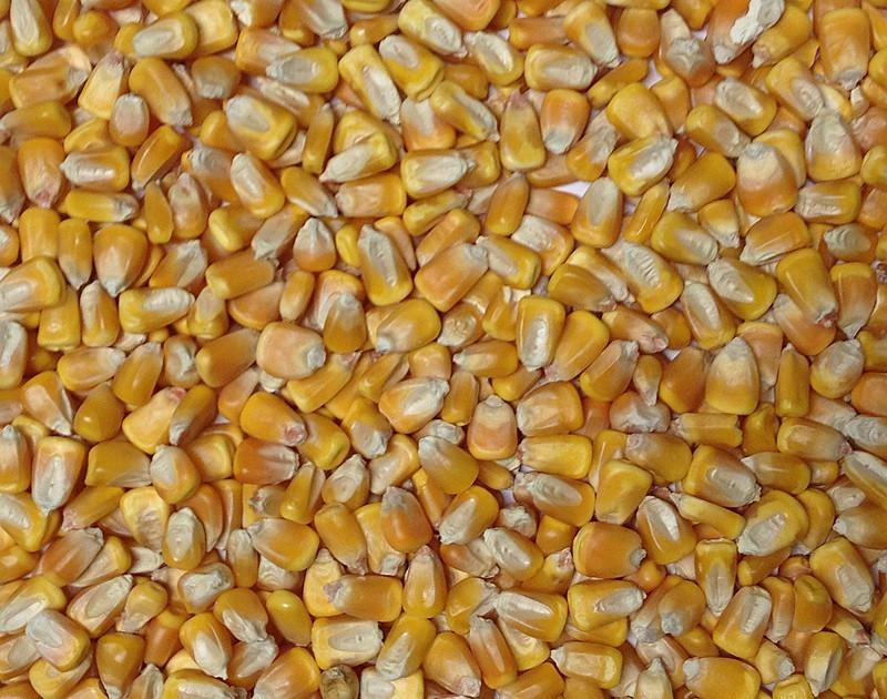 corn page 2