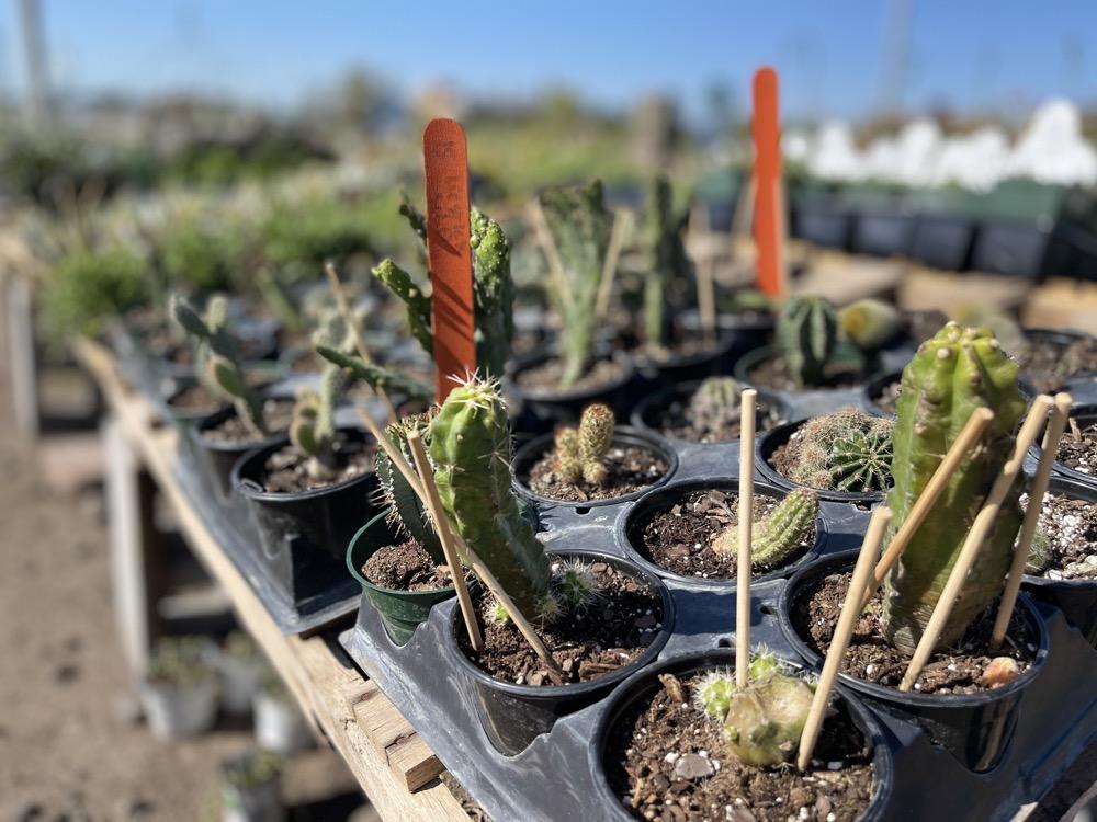 best garden cactus wichita