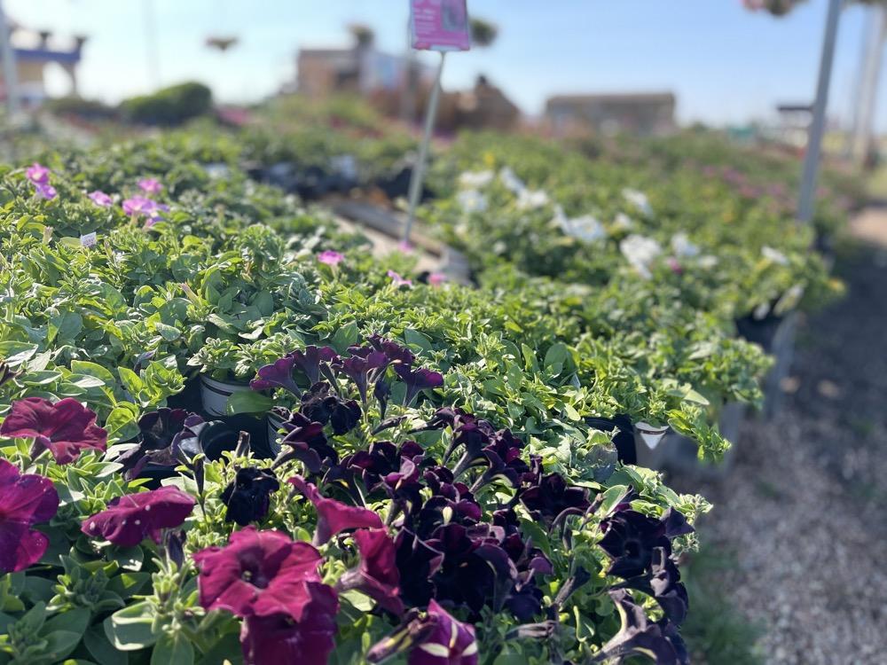 garden flowers sale wichita