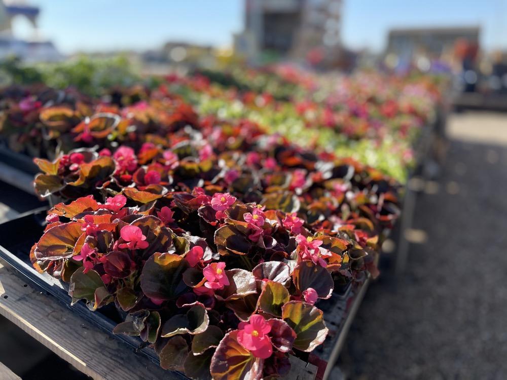 garden flowers wichita ks