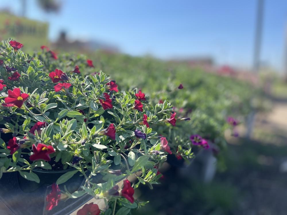 garden nursery flowers wichita