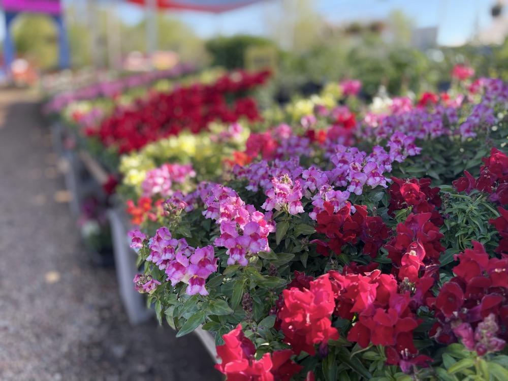 garden nursery in wichita