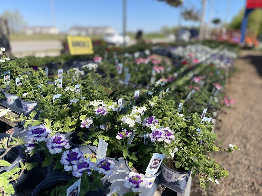 gardening plants wichita ks