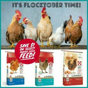 flocktober post